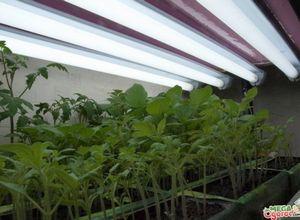 Подсветка для рассады – виды и правила использования