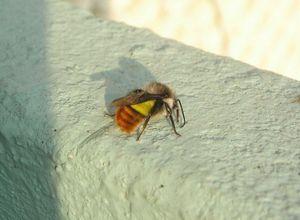 Полезные насекомые для борьбы с вредителями. божья коровка