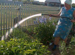 Полив. овощи просят воды