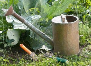 Полив овощных культур