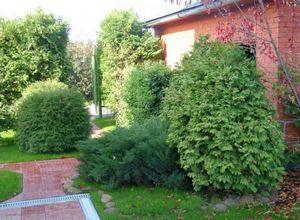 Посадка деревьев и растений в саду, на даче