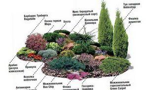 Посадки многолетних растений