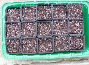 Посев мелких семян
