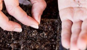 Посев семян в открытый грунт в мае