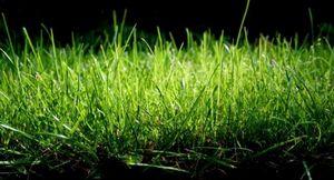 Правила посадки газона