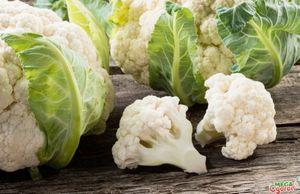 Правильное выращивание цветной капусты в открытом грунте