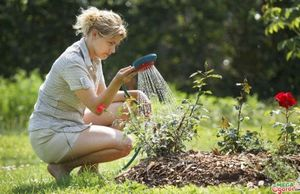 Правильный уход за розами поможет вырастить красивые цветы