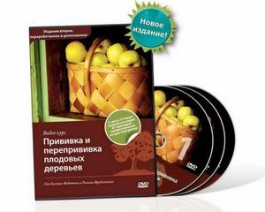 Прививка и перепрививка плодовых деревьев. прививка черенком