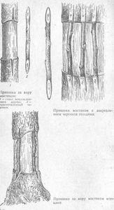 Прививка и перепрививка плодовых деревьев - способы, правила и преимущества