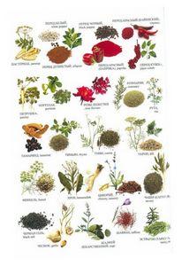 Пряные культуры. справочник растений