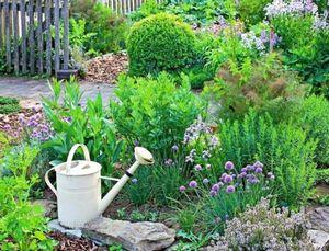 Пряные травы в вашем саду: идеи оформления, посадка и уход