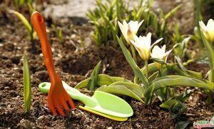 Работы в саду весной: уборка, обрезка и посадка