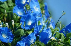 Растения для борьбы с вредителями