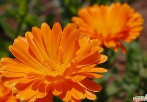 Растения которые лечат человека: характеристика и применение