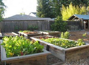 Разработка плана огорода: что и где лучше посадить