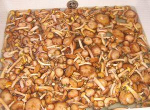Рецепты по заготовке грибов на зиму (белые, сыроежки, свинухи)