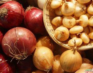 Рекомендации для огородников: как вырастить лук из семян за один сезон