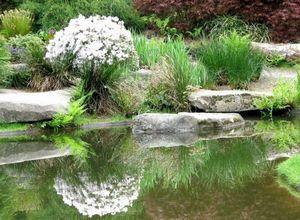 Рогульник – красивое украшение для водоема в саду
