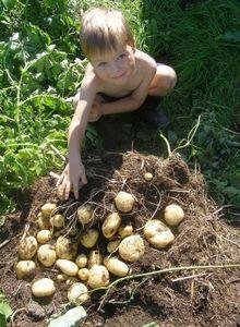 С чего начать органическое земледелие? часть 1