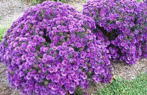 Сад и огород для «ленивых» – несколько полезных советов