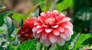 Садовые цветы, цветущие все лето: обзор лучших сортов