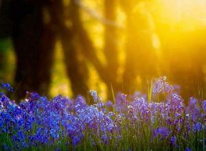 Садовые и комнатные клубневые растения: виды и выращивание