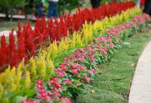 Самые красивые низкорослые цветы для вашего сада