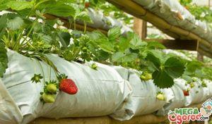 Самые лучшие сорта петуний и особенности их выращивания