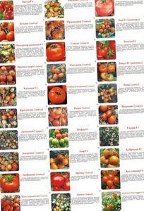 Самые лучшие сорта помидор для открытого грунта и теплиц