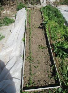 Самые первые огородные посевы