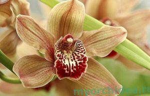 Самые распространенные заболевания и вредители орхидей