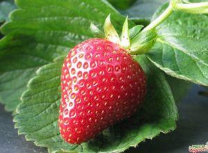 Секреты выращивания клубники - от посадки до ухода