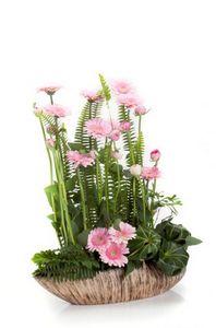 Семьи хризантем