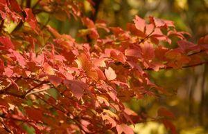 Сезонные работы в саду и огороде: конец октября - начало ноября
