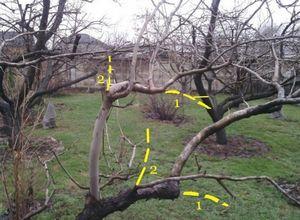 Схема и принципы обрезки деревьев