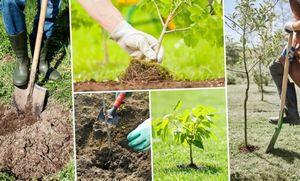 Шесть правил посадки деревьев в саду