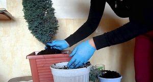 Шпаргалка для садовода: как правильно ухаживать за кипарисом