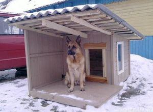 Собака в доме. как построить конуру