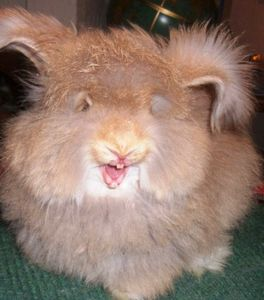 Содержание и уход за кроликами