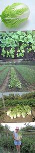 Сохраним-ка цветную капусту на всю зиму