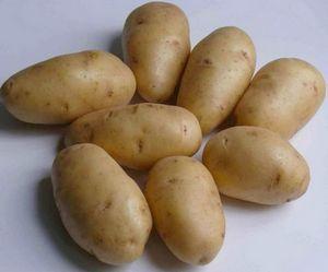 Сорт картофеля адретта – очень вкусный и высокоурожайный