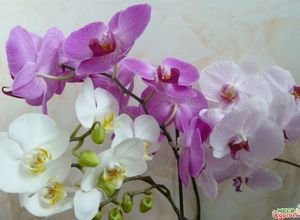 Советы цветоводам: как правильно ухаживать и пересаживать орхидею