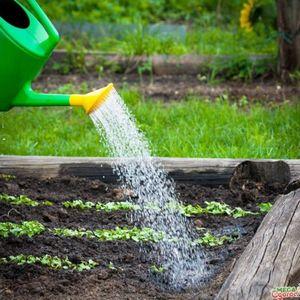 Советы и рекомендации о том, как правильно посадить чеснок на своем участке