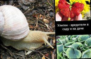 Способы борьбы с улитками в саду