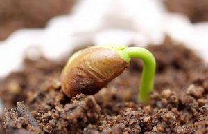 Стратификация семян: описание и способы стратификации