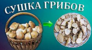 Сушка на зиму и хранение сушеных грибов