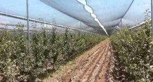 Технологическая карта выращивания картофеля – данные и технология возделывания корнеплода