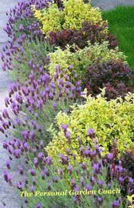 Тенелюбивые многолетники для сада: подборка лучших теневыносливых цветов