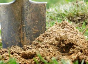 Томаты и песчаная почва