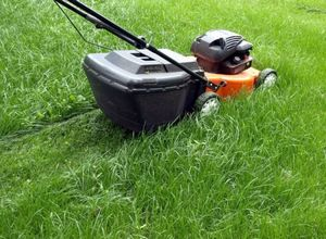 Уход за газоном - советы садоводов